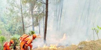 page3news-uttarakhand forest fire