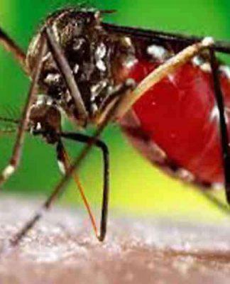 page3news-dengue