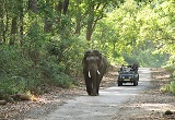 Uttarakhand tourism: wildlife safari
